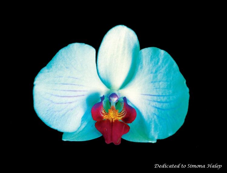 Orhidee_ptSH